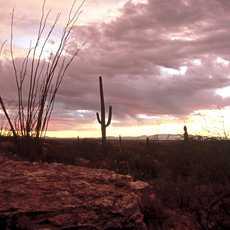 Dusk in ther Desert in Tucson, Arizona