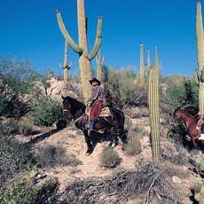 Pferdeausflug durch die Wüste, Tucson Arizona