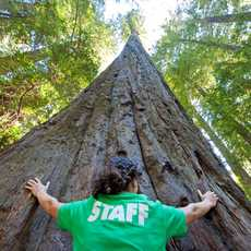 Frau vor Redwood Tree