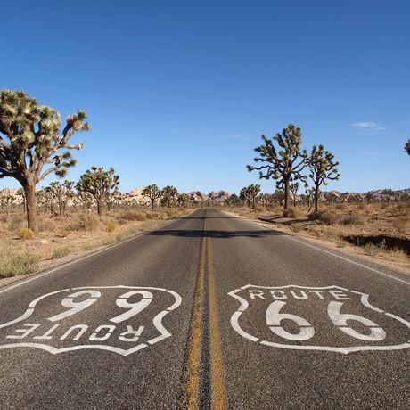 Joshua Trees in der Mojave-Wüste