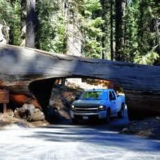 Unterwegs mit einem Pickup im Sequoia-Nationalpark