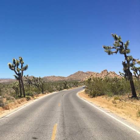 Ein Highway im Joshua-Tree-Nationalpark