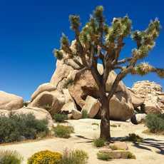 Joshua-Tree-Nationalpark in Kalifornien