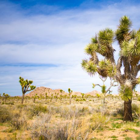 Joshua Tree National Park, Kalifornien