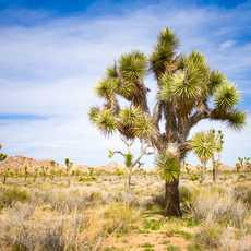 Joshua Tree National Park, Kalifornien