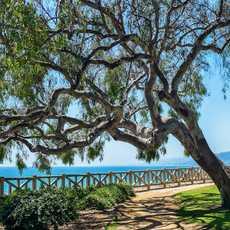 Der Tree Palisades Park mit Blick auf das Meer