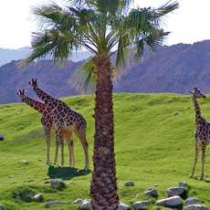Palm Springs Living Desert