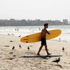 Surfer La Jolla, San Diego