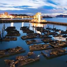 San Francisco Bay Area, San Francisco, Fisherman´s Wharf, Pier 39, sea lions
