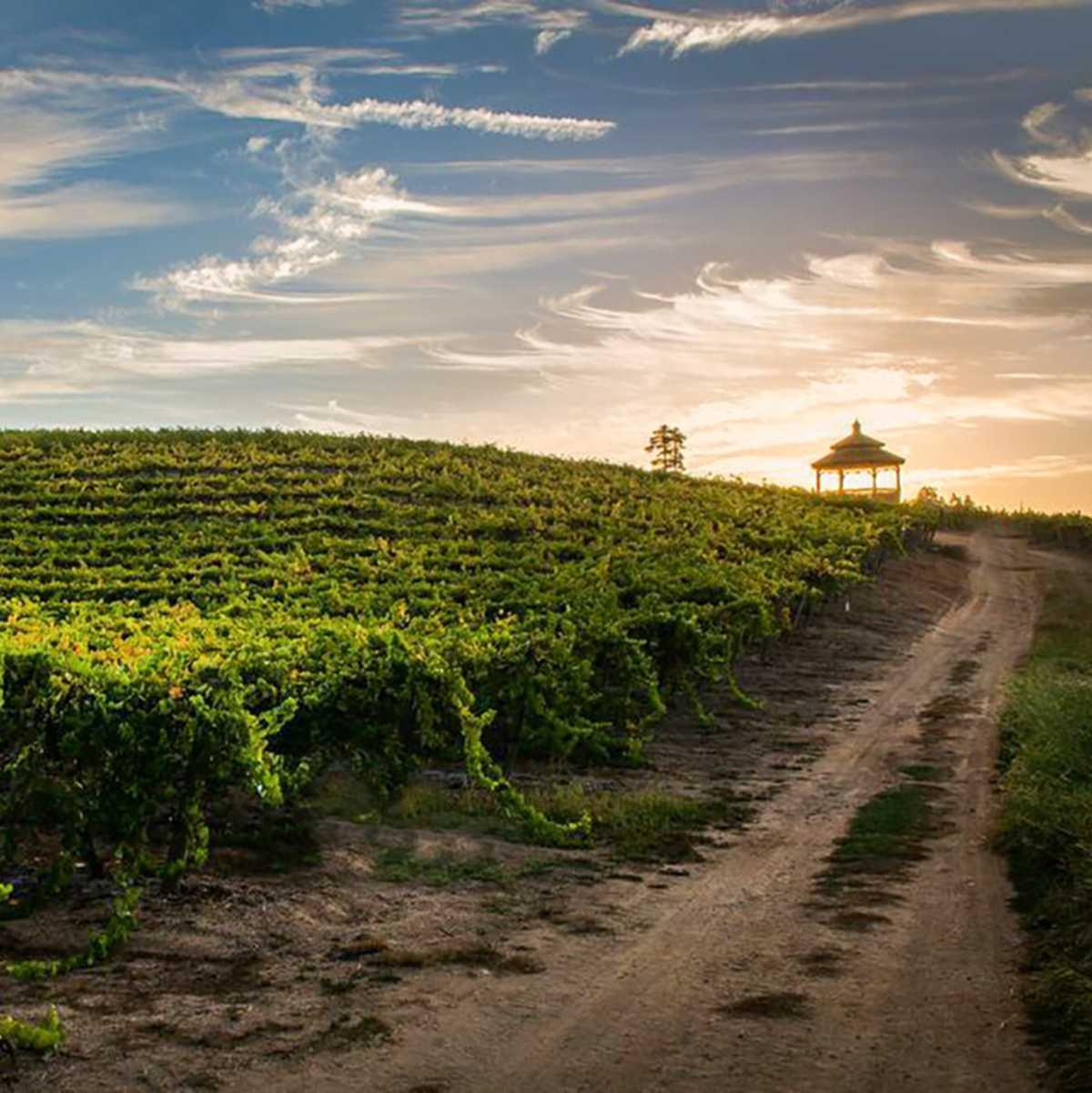 Das Weingut der Bargetto Winery in Santa Cruz