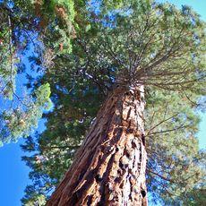 Riesiger Baum Froschperspektive