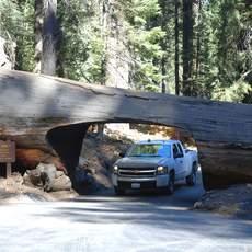 Auto faehrt durch Baum