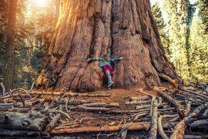 Ein Mädchen umarmt einen Riesenmammutbaum im Sequoia-Nationalpark im US-Bundesstaat Kalifornien