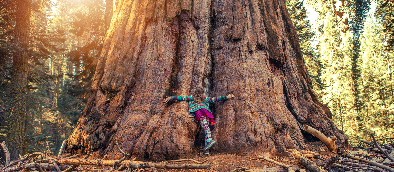 Ein Mädchen umarmt einen gigantischen Mammutbaum im Sequoia National Park, Kalifornien