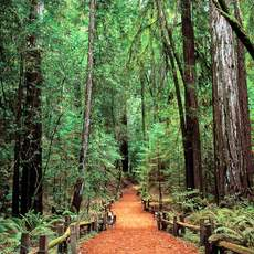 Sonoma County, Armstrong Redwoods State Natural Reserve