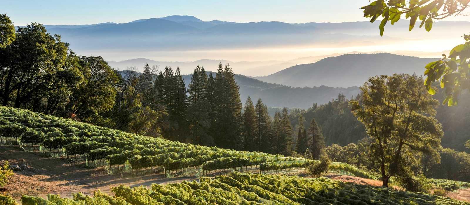 Ein Weinhang des Dry Creek Valleys im kalifornischen Sonoma County