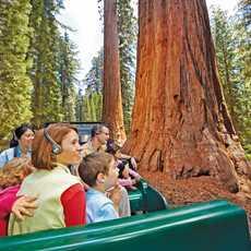 Tour durch den Yosemite National Park