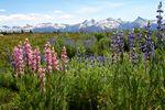 Die schönen Blumenwiesen des Yosemite National Parks, Kalifornien