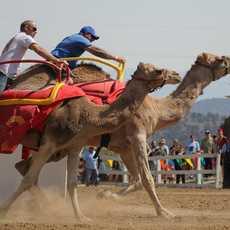 Kamelreiten in Virginia City