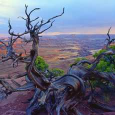 Island in the Sky Overlook, Canyonlands National Park