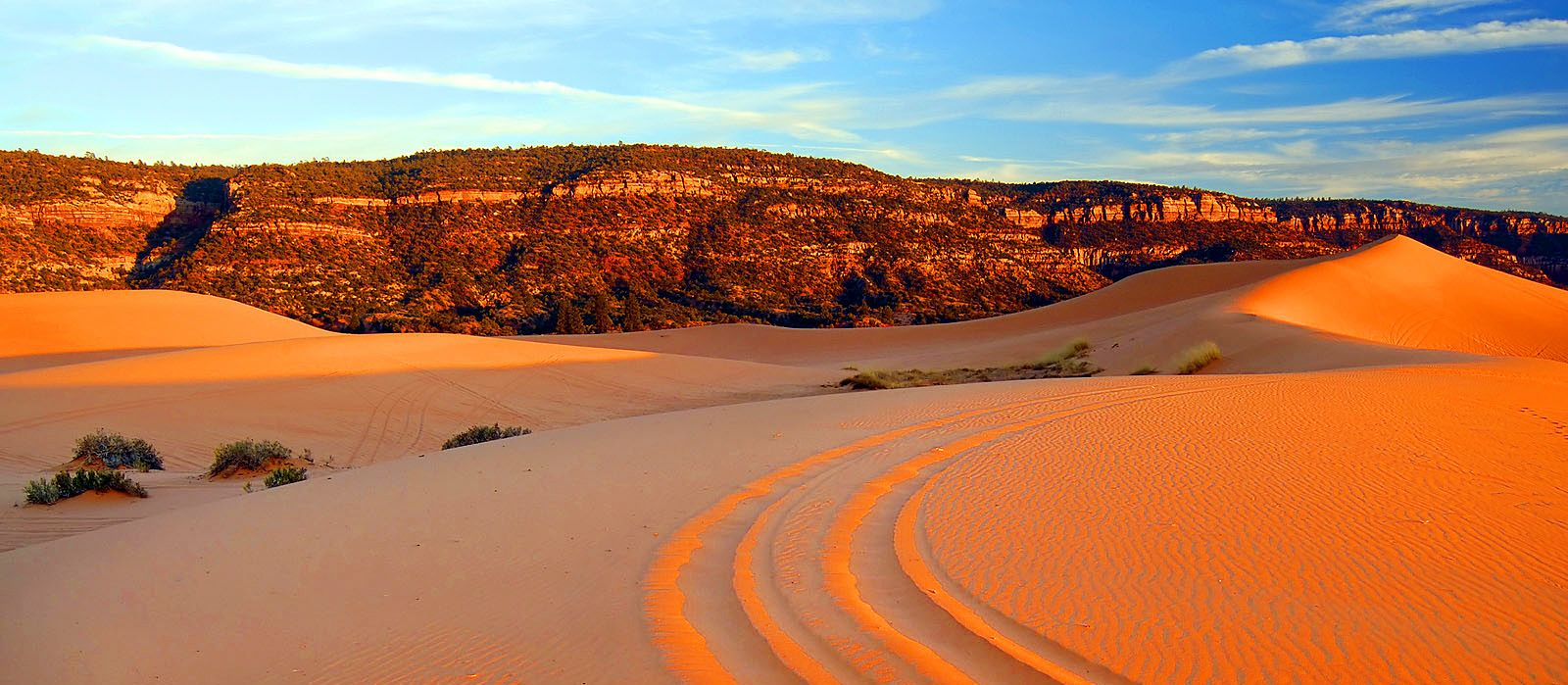 Coral Pink Sand Dunes State Park in Kanab