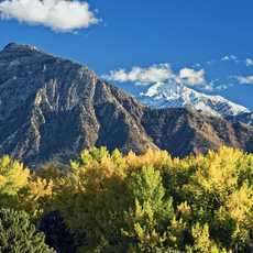 Cottonwood trees with bright yellow autumn colors in Sugarhouse Park in Salt Lake City Utah. Mount Olympus looms in the distance.