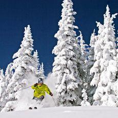 Skifahrer bricht aus dem Wald