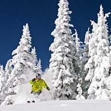 Skifahrer bricht aus dem Wald im Silver Star Mountain Resort