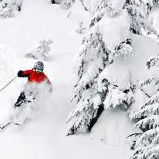 Skifahrer bei der Abfahrt im Wald