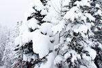 Verschneiter Baum im Sunshine Village