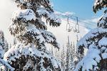 Neuschnee auf den Bäumen in Whistler in British Columbia