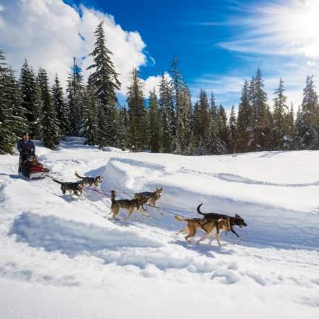 Hundeschlittentour mit Canadian Wilderness Adventures im Callaghan Valley