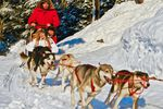 Trapper's Run Dogsled Tour